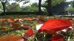 Beautiful autumn leaves in temple complex in Kyoto, Japan Stock Footage
