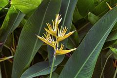 Flower Bird of Paradise tropical garden Stock Photos
