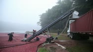 Stock Video Footage of Cranberry Harvest in New England Autumn - machine and truck