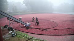 Stock Video Footage of High Angle Cranberry Harvest in New England Autumn