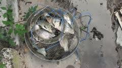 Keep net full of fish Stock Footage