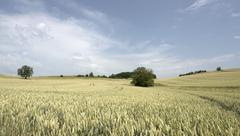 Rural pictorial agriculture scenery at summer time Stock Photos