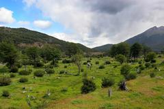 Ushuaia National Park-2.jpg - stock photo
