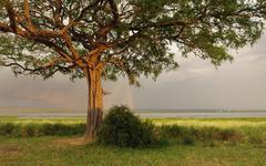 idyllic scenery around lake albert in uganda - stock photo