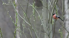Birds on a tree in spring Stock Footage