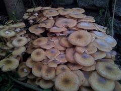 Mushroom.jpg Stock Photos