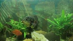 Utelias kala akvaariossa Arkistovideo
