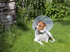 Canine patient 4 Stock Photos