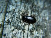 Young ground beetle on wood Stock Photos
