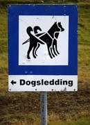 Dogsledding Stock Photos