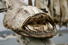 dried monkfish - stock photo