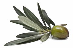 Stock Photo of green olive to make oil.
