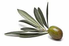 closeup from a green olive. - stock photo