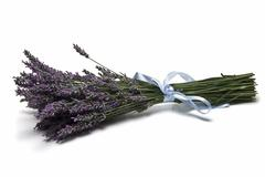 Bunch of lavender. Stock Photos