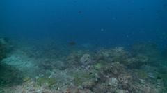 Scalloped hammerhead shark turn Stock Footage