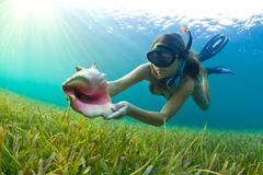 Snorkelling with a conch shell Stock Photos