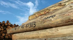 Timber logs Stock Footage