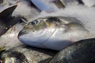 Stock Photo of seabream