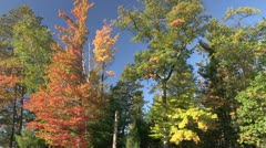 Fall Colors/Slow Drift Stock Footage