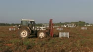 Stock Video Footage of Tractor lifting crates of tomatoes