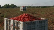 Stock Video Footage of Large crates of tomatoes