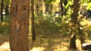 Tree Trunk Fall Bokeh Stock Footage