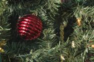 Stock Photo of Single Red Ornament with Lights on Tree