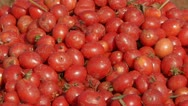 Freshly picked tomatoes Stock Footage