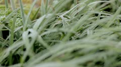 Frost on Grasses - stock footage