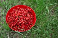 Currants in a bowl Stock Photos