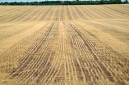 Stubble field with panoramic view Stock Photos