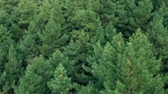 Stock Video Footage of Conifer forest from above