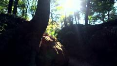 Traveler goes through the woods Stock Footage
