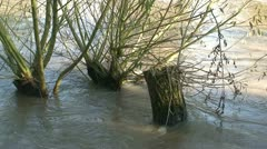 Willows in a river Stock Footage