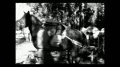Wyoming loading pack horses 1935 B-W Stock Footage