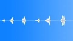 Whale Sound Sound Effect