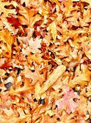 Sidewalk Leaves Stock Photos