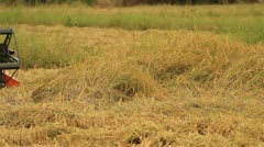 Rice farm Stock Footage
