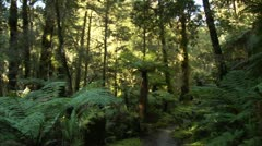New Zeland Forest Stock Footage