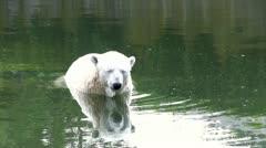 Polar bear sitting in water Stock Footage