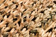 Stock Photo of Sesame harvest