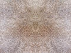 Fur texture background Stock Photos