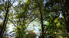 Driving Alongside Forest Woods in the Afternoon Stock Video Stock Footage