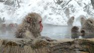 Stock Photo of japanese macaque in hot spring