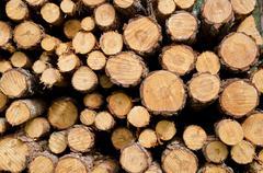 Stock Photo of biomass