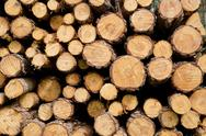 Stock Photo of biomass