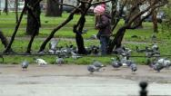 Stock Video Footage of Little girl feeds a flock of pigeons in the park