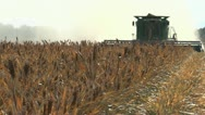 Stock Video Footage of Sorghum Harvest Time Lapse