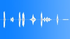 Parrots - sound effect