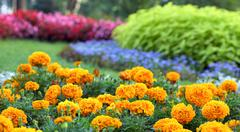 Stock Photo of flower landscaping